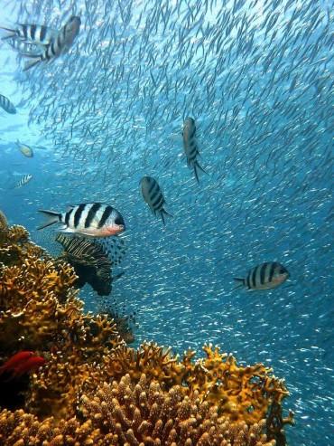 diving in Ionian Sea Albania